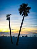 Siluetta delle palme Fotografie Stock Libere da Diritti