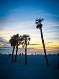 Siluetta delle palme Fotografia Stock Libera da Diritti