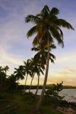 Siluetta delle palme ad alba, spiaggia di Las Galeras Fotografia Stock