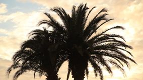 Siluetta delle palme
