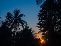Siluetta delle palme al tramonto ed alle nuvole multicolori fotografia stock libera da diritti