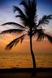 Siluetta delle palme alla spiaggia tropicale di tramonto Tramonto arancione Fotografia Stock Libera da Diritti