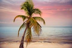 Siluetta delle palme alla spiaggia tropicale di tramonto Tramonto arancione Immagine Stock Libera da Diritti
