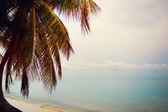 Siluetta delle palme alla spiaggia tropicale di tramonto Tramonto arancione Immagini Stock