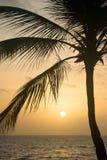 Siluetta delle palme alla spiaggia tropicale di tramonto Tramonto arancione Immagine Stock