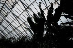 Siluetta delle piante tropicali in Glasshoue Fotografie Stock Libere da Diritti