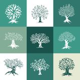 Siluetta delle querce e dell'oliva isolata sul fondo di colore Immagini Stock Libere da Diritti