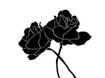Siluetta delle rose Fotografia Stock Libera da Diritti