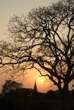 Siluetta delle scene crepuscolari della pagoda nel parco storico di Ayutthaya Immagine Stock