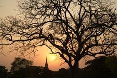Siluetta delle scene crepuscolari della pagoda nel parco storico di Ayutthaya in Tailandia Fotografia Stock Libera da Diritti