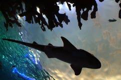 Siluetta dello squalo Immagini Stock