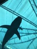Siluetta dello squalo Fotografie Stock Libere da Diritti