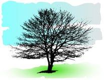Siluetta dettagliata dell'albero di vettore Fotografia Stock Libera da Diritti