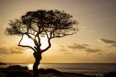 Siluetta di alba dell'albero Immagine Stock Libera da Diritti