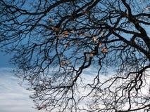 Siluetta di Autumn Tree fotografia stock libera da diritti