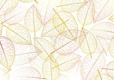 Siluetta di autunno del foglio Fotografie Stock Libere da Diritti