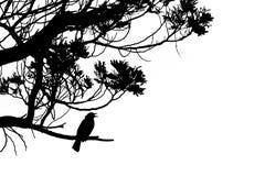 Siluetta di canto del merlo comune in un albero Fotografia Stock Libera da Diritti