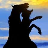 Siluetta di elevazione dei due cavalli Fotografie Stock Libere da Diritti