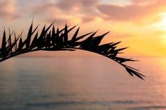 Siluetta di foglia di palma Fotografie Stock