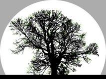 Siluetta di grande albero Fotografia Stock Libera da Diritti