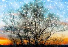 Siluetta di grande vecchio albero sul bello fondo di tramonto dell'oro immagine stock