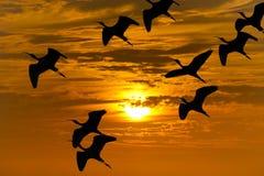 Siluetta di migrazione di uccello immagini stock