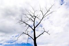 Siluetta di morte dell'albero Immagine Stock