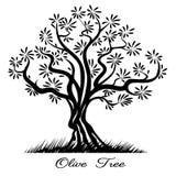 Siluetta di Olive Tree Fotografie Stock Libere da Diritti