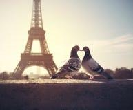 Siluetta di piccioncino sul fondo vago della torre Eiffel Fotografia Stock