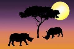Siluetta di rinoceronte nel tramonto Immagine Stock Libera da Diritti