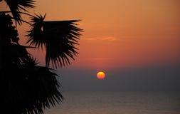 Siluetta di Sugar Palm e del mare Immagini Stock