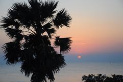 Siluetta di Sugar Palm e del mare Fotografie Stock