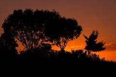 Siluetta di tramonto Fotografia Stock Libera da Diritti