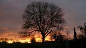 Siluetta di tramonto Fotografie Stock