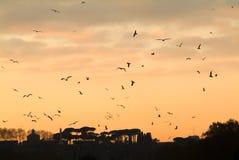 Siluetta di tramonto con gli uccelli di volo a Roma Fotografia Stock Libera da Diritti