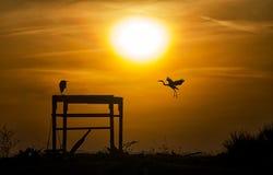 Siluetta di tramonto degli aironi Fotografia Stock Libera da Diritti