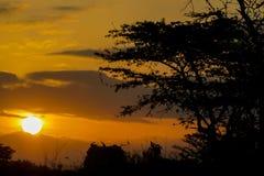 Siluetta di tramonto degli alberi Immagine Stock Libera da Diritti