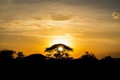 Siluetta di tramonto degli alberi dell'acacia in savana africana Fotografia Stock Libera da Diritti