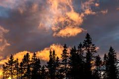 Siluetta di Treeline contro il tramonto drammatico fotografia stock