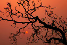 Siluetta di un albero Immagine Stock Libera da Diritti