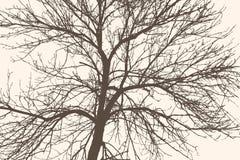Siluetta di un albero Fotografie Stock
