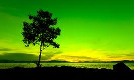 Siluetta di un albero al tramonto Immagine Stock