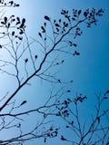 Siluetta di un albero contro cielo blu fotografia stock libera da diritti