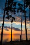Siluetta di un albero contro un fondo del tramonto immagine stock libera da diritti