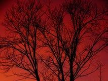 Siluetta di un albero e di un cielo rosa-rosso Immagini Stock