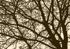 Siluetta di un albero di fioritura in primavera Fotografie Stock Libere da Diritti