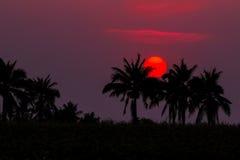 Siluetta di un albero nel tramonto Fotografie Stock