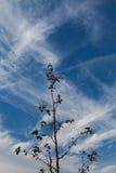 siluetta di un albero su un cielo blu immagini stock libere da diritti