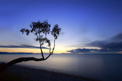 Siluetta di un albero su un'esposizione lunga sulle rive delle sedere del lago Immagini Stock Libere da Diritti