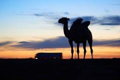 Siluetta di un cammello Fotografia Stock Libera da Diritti